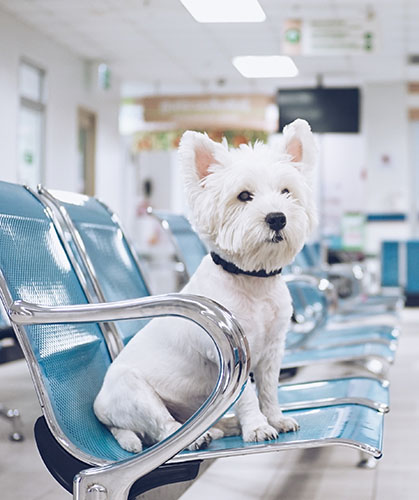 Dog in Waiting Room